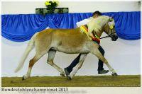aaa2013_08_Bundesfohlenchampionat_063_Bachelor_134