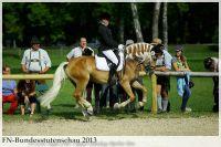 aaa2013_08_Bundesstutenschau_020_Narnia_052