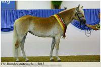 aaa2013_08_Bundesstutenschau_043_Stelia_250