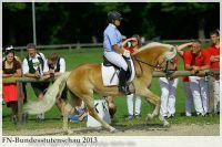aaa2013_08_Bundesstutenschau_043_Stelia_304